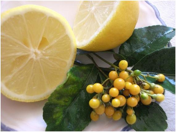 Aniversario de Boda Flores y limón