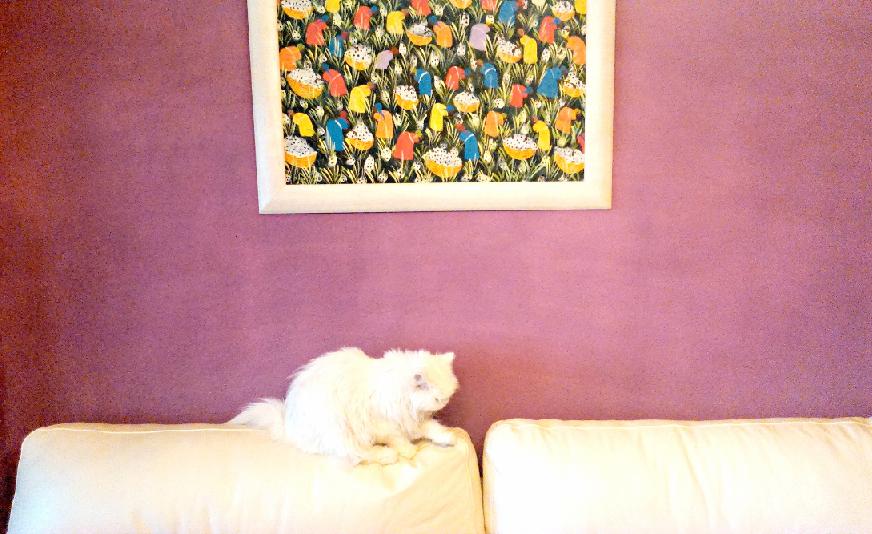 Radiant Orchid en la pared de mi casa