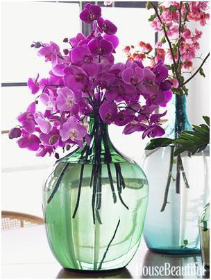 Radiant Orchid Flor