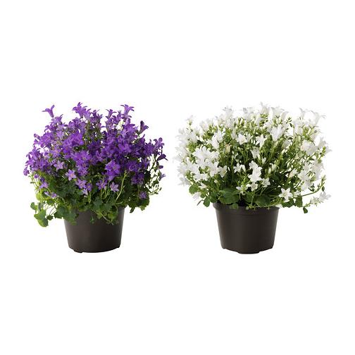 Flores de Ikea
