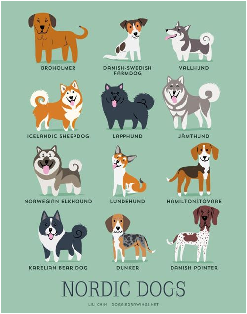 Perros. Razas Nórdicas
