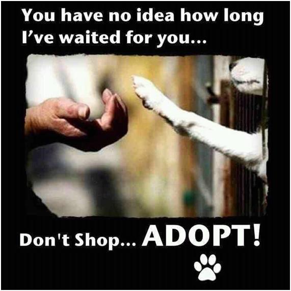 Perros. Adopta.