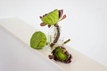 Mesa Masculina - Arreglo Floral con Suculentas