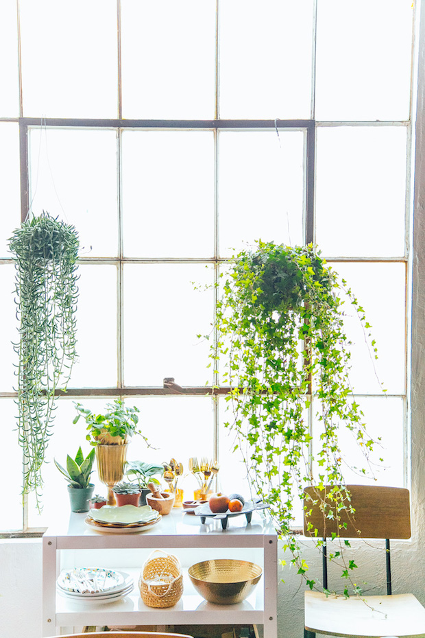 2016 Decorating Trends plantas