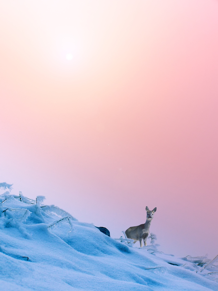 Decor Trends 2016 Pink Quartz y Serenity