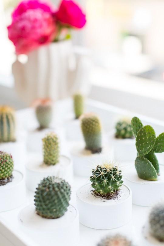 Fiesta de cactus naturales