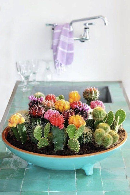 Decorar con plantas cactus