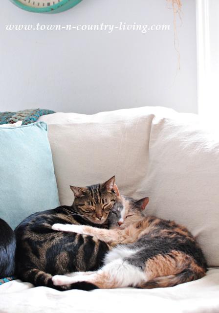 Renovar un sofá anticuado Puddy-and-Stella
