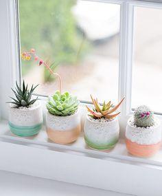 plantas para decoración nórdica suculentas
