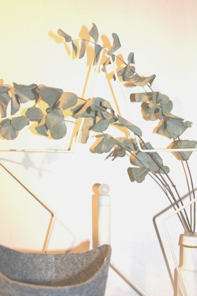 Plantas para decoración nórdica