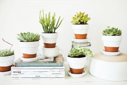 decorar con plantas suculentas 2