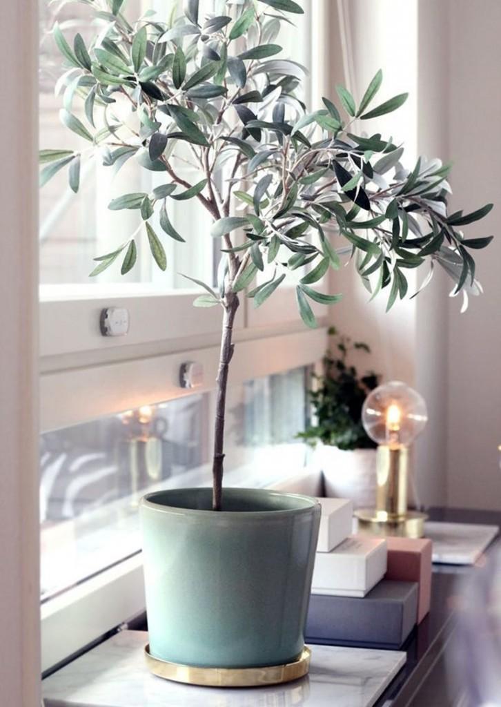Inspiración para decorar con olivos de interior