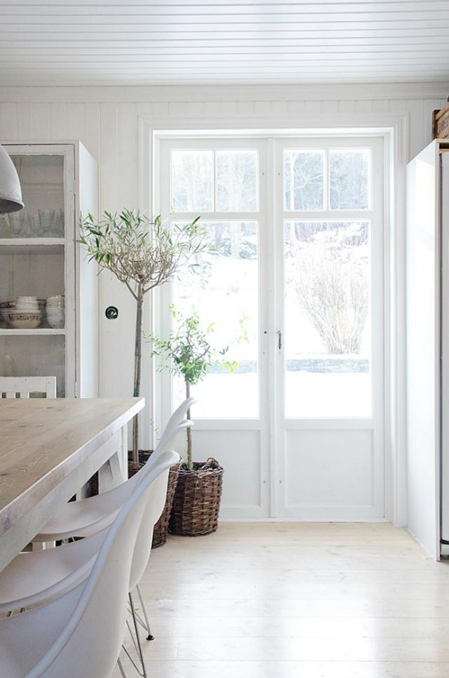 Decorar con olivos de interior una cocina