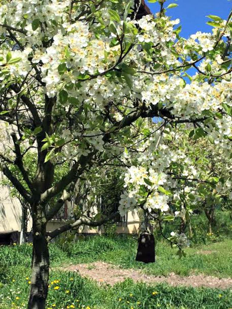ramas para una mesa primaveral con inspiración nórdica