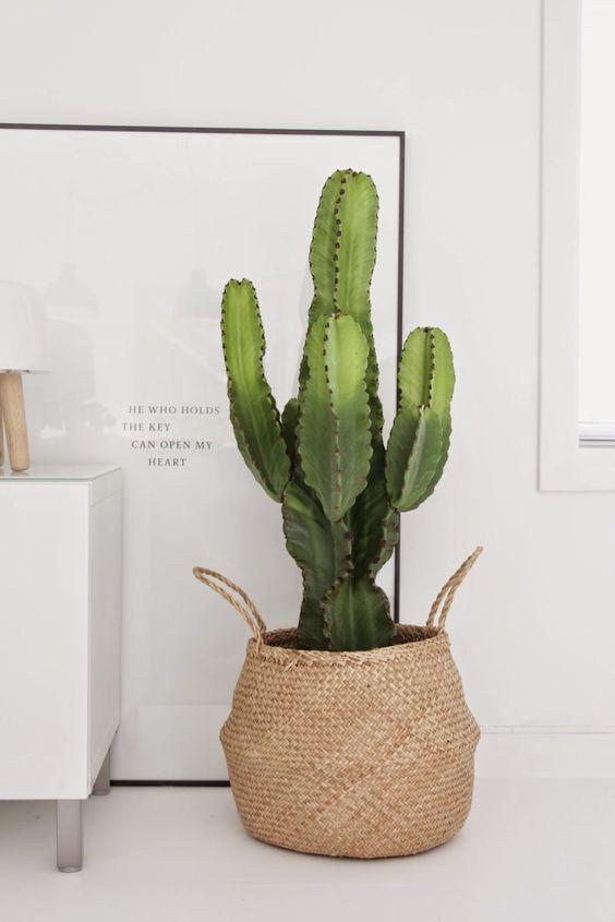 decoración nórdica cactus