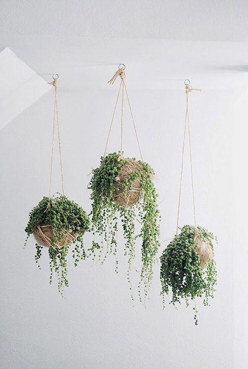 Plantas de moda colgantes