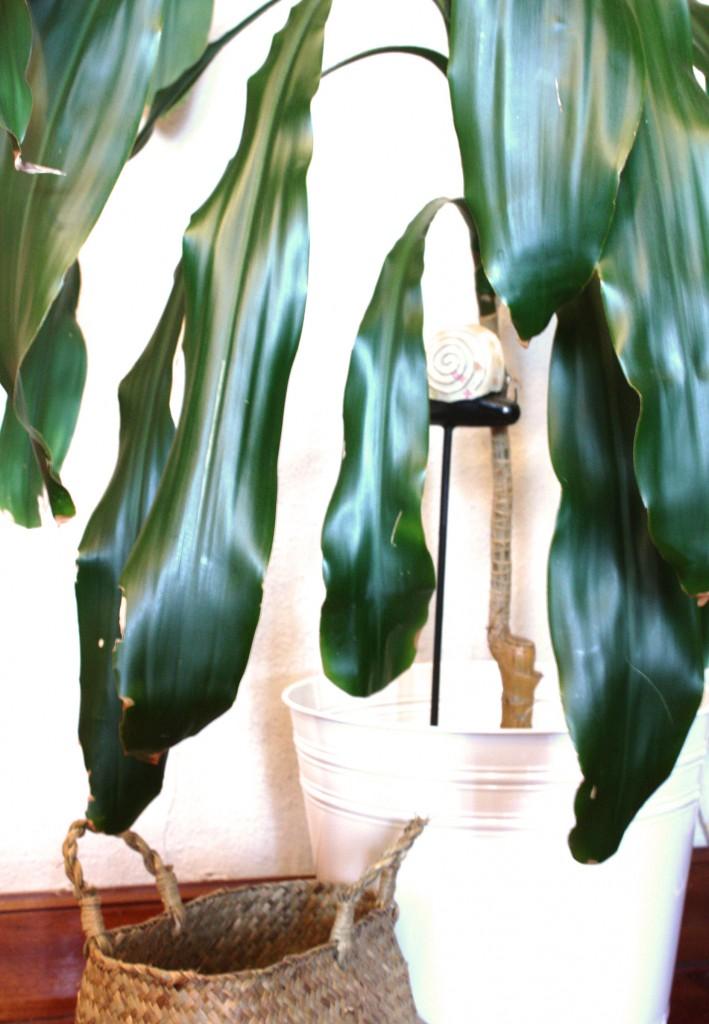 Planta comedor